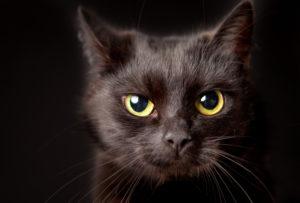 Тест: Насколько вы суеверны?