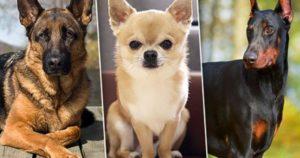 Тест: Какая порода собаки вам подходит?