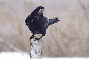Тест: Сможете узнать 15 птиц по фото?