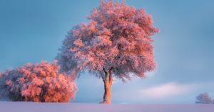 Тест: Что вы знаете о снеге, холоде и зиме?