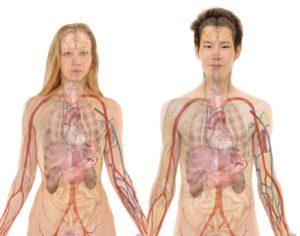 Тест: Хорошо ли вы изучали анатомию?