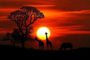 Тест: Сможете ли вы назвать родные континенты этих животных?