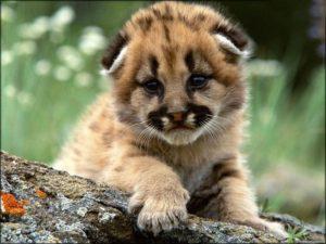 Тест: А вы знаете, как называются детёныши животных?