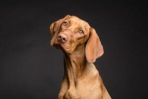 Тест: Собакой какой породы вы могли бы стать