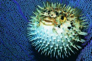 Тест: Какое из этих животных реально опасно?