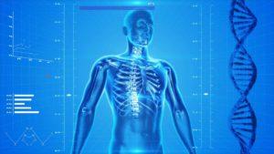 Анатомический тест: Сможешь назвать все эти органы?
