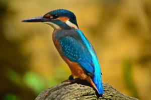 Тест: Насколько хорошо вы знаете виды птиц?