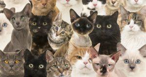 Тест: На какую кошку или кота вы похожи