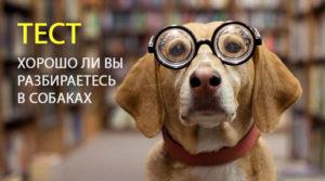 Тест: Что вы знаете о собаках?
