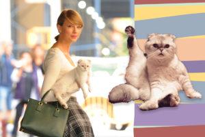 Тест для девочек: Выбери котиков, и мы скажем, какая ты кошатница!