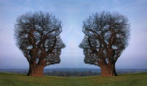 Тест: Какое ты дерево?