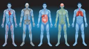 Тест: Что вы знаете о своем теле?
