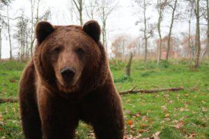 Тест: Выживете ли вы при встрече с медведем?