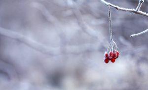 Тест для знатоков: Сможете угадать автора этого стихотворения о зиме?