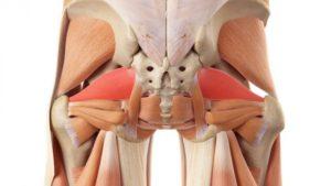 Тест по медицине: Что вы знаете о синдроме грушевидной мышцы?