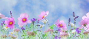Тест: Проверьте свои знания о цветах