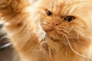 Тест: На какого суперзлодея похож ваш кот?