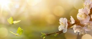 Тест: Угадайте авторов стихотворений о весне