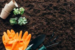 Тест: Хорошо ли вы теоретически готовы к наступлению весны в своем саду?