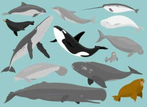 Тест: Кто ты из морских млекопитающих?