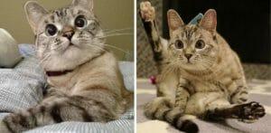 Тест: Кто ты из знаменитых в Интернете котов?