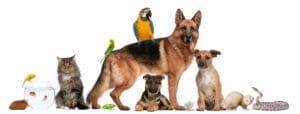 Тест для знатоков: А что вы вообще знаете о животных?