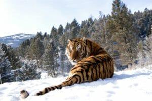 Тест: Какой фильм о дикой природе вам посмотреть ?