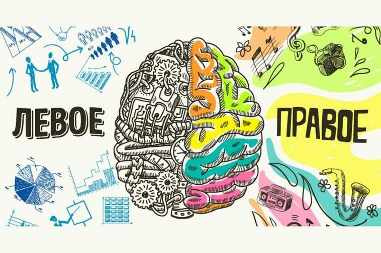 Картинка правое полушарие мозга