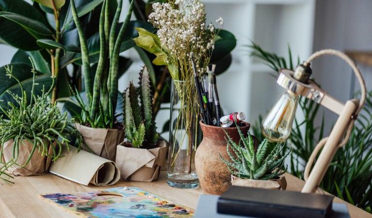 Тест: Насколько хорошо вы помните ботанику?