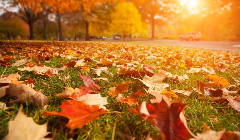 Тест: Хорошо ли вы помните песни про осень?