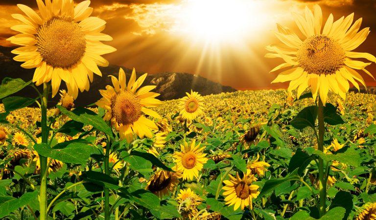Выбери солнышко и узнай о скрытых чертах своей личности
