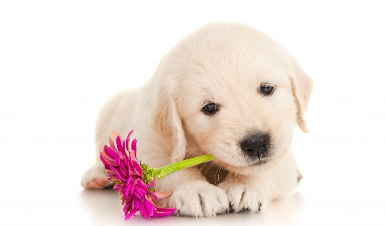 Тест: Насколько хорошо вы разбираетесь в породах собак?