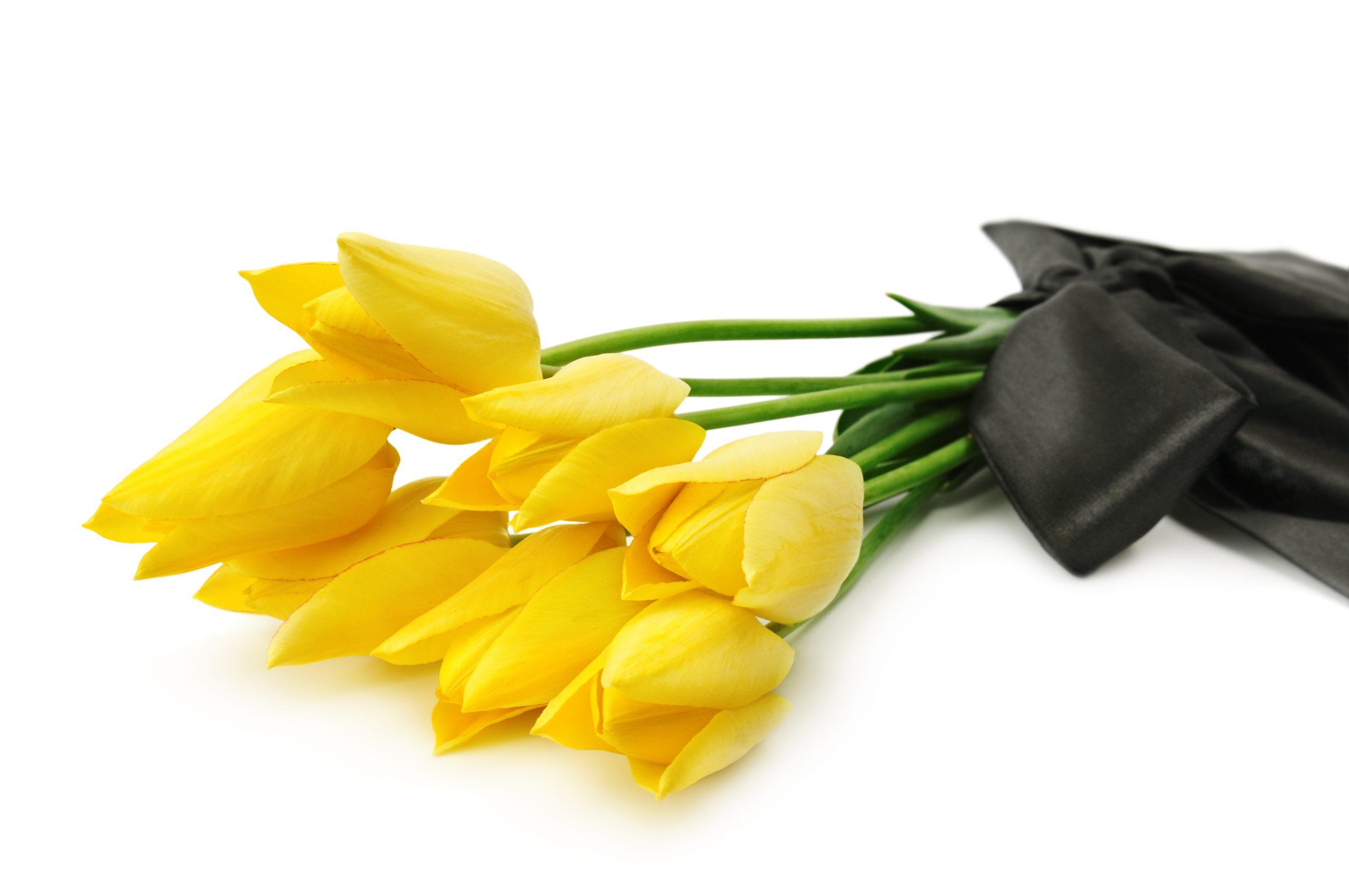 цветы фото траур желтые фенечку любой