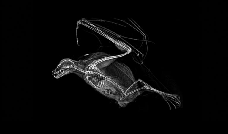 Тест: Сможете ли вы угадать животное по рентгеновскому снимку?